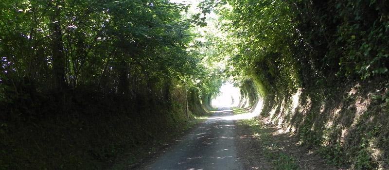 route-arbre